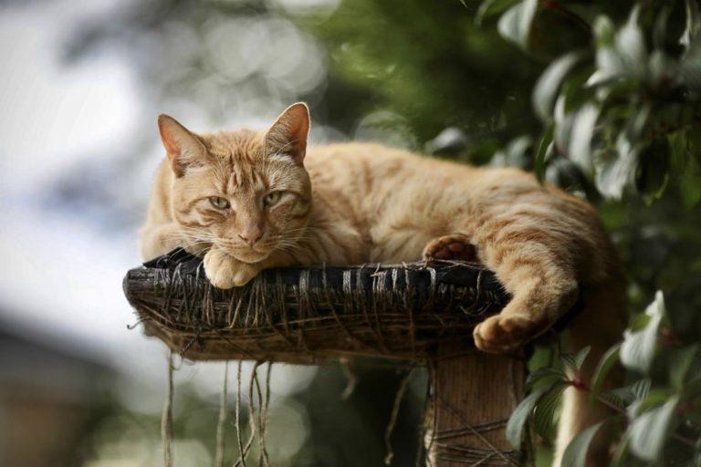 Nie szukaj nigdzie indziej, dopóki nie przeczytasz tych wspaniałych wskazówek na temat kotów